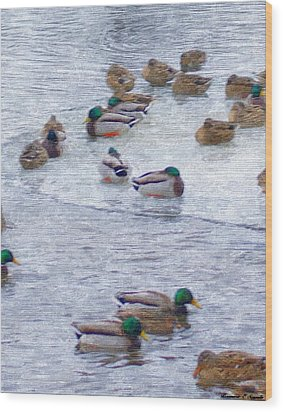February  And Cold Ducks Wood Print by Rosemarie E Seppala