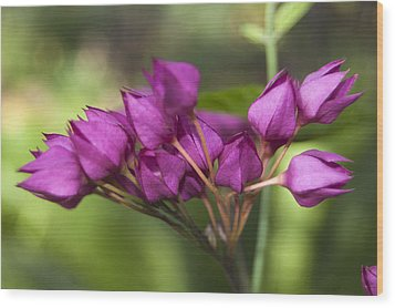 Wood Print featuring the photograph February Color by Penny Lisowski