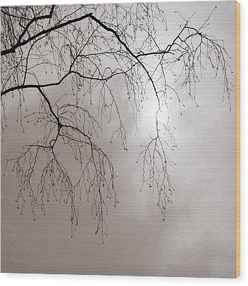 February Sun - Featured 3 Wood Print by Alexander Senin