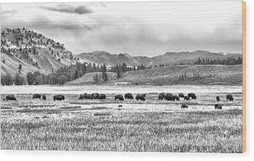 Feeding Bison And Scenic View  Wood Print