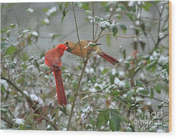 Feeding Cardinals Wood Print by Geraldine DeBoer