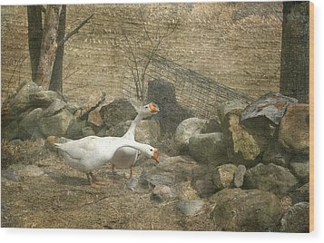Feeding Geese   Wood Print by Betty  Pauwels