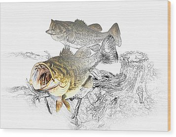 Feeding Largemouth Black Bass Wood Print