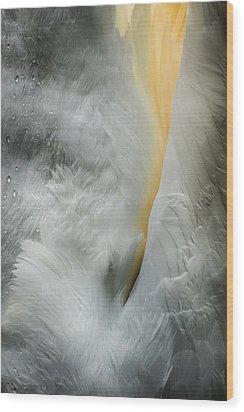 Feeding Swan Wood Print by Andy Astbury