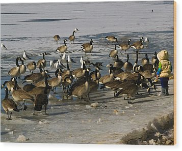 Feeding The Geese Wood Print by Matt Radcliffe