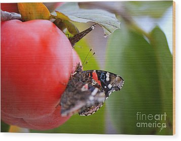 Wood Print featuring the photograph Feeding Time by Erika Weber