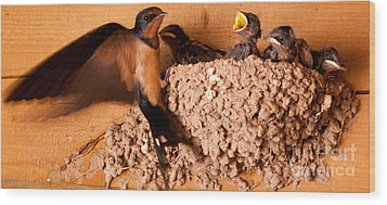 Feeding Time Wood Print by Roselynne Broussard