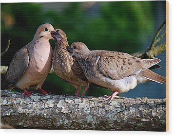 Feeding Twin Mourning Doves Wood Print
