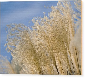 Wood Print featuring the photograph Feel The Breeze by Robert Culver