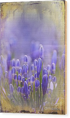Wood Print featuring the photograph Feelin' Blue ... by Chris Armytage