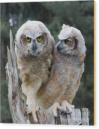 Feeling A Little Grumpy Are We? Wood Print by Barbara McMahon