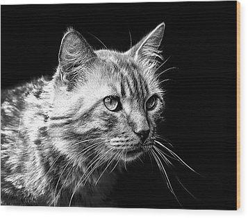 Feline Wood Print by Camille Lopez