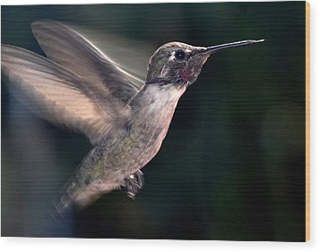 Wood Print featuring the photograph Male Anna In Flight by Jay Milo