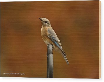Wood Print featuring the photograph Female Bluebird by Robert L Jackson
