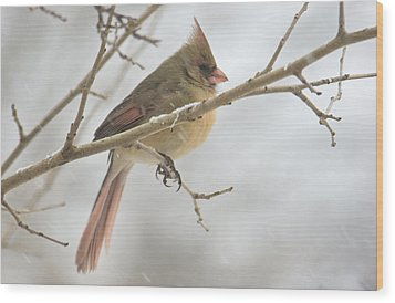Female Cardinal In Snow 02 Wood Print by Shelly Gunderson