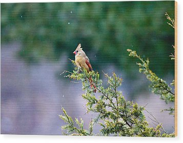 Female Cardinal In Snow Wood Print by Eleanor Abramson
