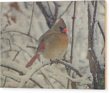 Female Cardinal In The Snow II Wood Print by Sandy Keeton
