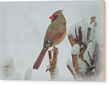Female Cardinal In The Snow Wood Print by Sandy Keeton