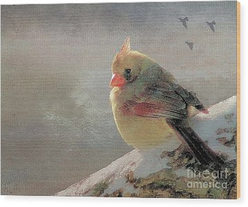 Female Cardinal V Wood Print by Janette Boyd