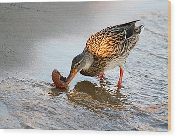 Female Mallard Duck  Wood Print by Ann Murphy