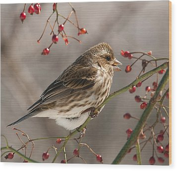Wood Print featuring the photograph Female Purple Finch On Berries by Lara Ellis