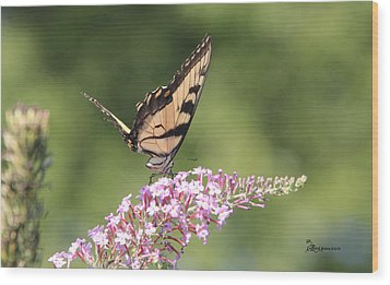 Female Tiger Butterly-1-featured In Macro-comfortable Art And Newbies Groups Wood Print by EricaMaxine  Price
