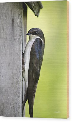 Tree Swallow On Nestbox Wood Print by Christina Rollo