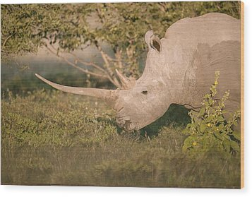 Female White Rhinoceros Grazing Wood Print by Science Photo Library