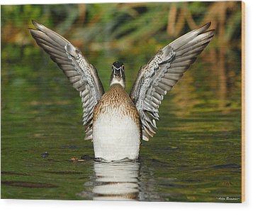 Female Wood Duck Wood Print by Avian Resources