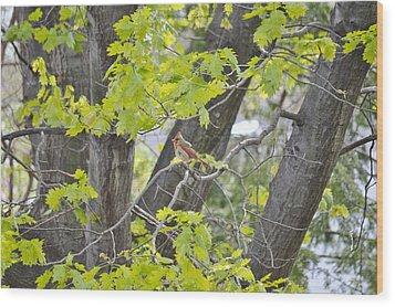 Feminine Cardinal Wood Print by Sonali Gangane