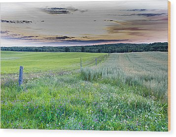 Fence Line Dawn Wood Print