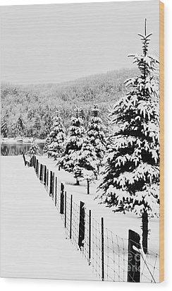 Fence Line Wood Print by Tim Wilson