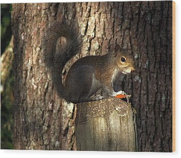 Wood Print featuring the photograph Fence Post Squirrel  by Chris Mercer