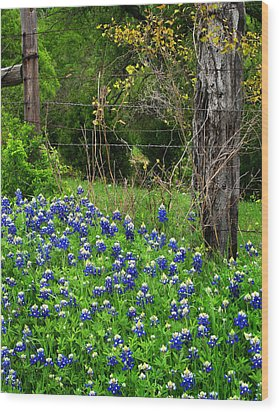Fenced In Bluebonnets Wood Print by David and Carol Kelly