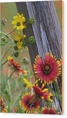 Fenceline Wildflowers Wood Print
