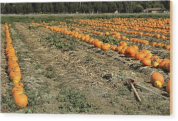 Fencing The Pumpkin Patch Wood Print by Michael Gordon