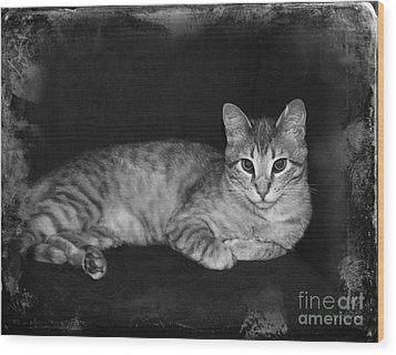 Feral Cat Day Wood Print