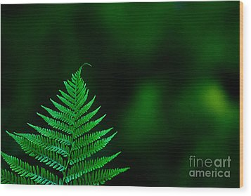 Wood Print featuring the photograph Fern 2012 by Art Barker