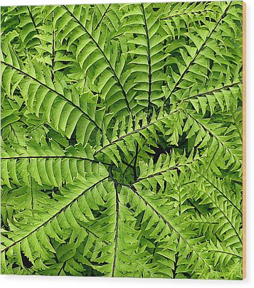 Fern Abstract Wood Print by Brian Chase