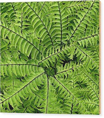 Fern Abstract Wood Print