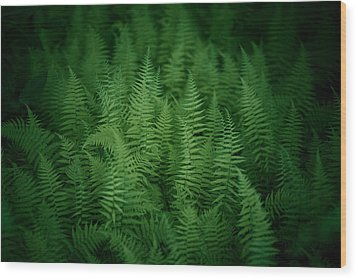Fern Bed Wood Print