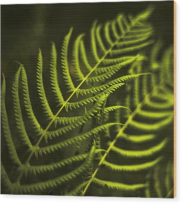 Wood Print featuring the photograph Fern by Bradley R Youngberg