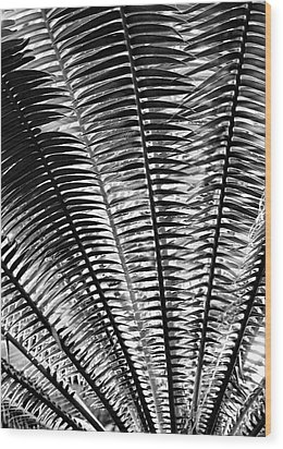 Fern Frond Wood Print by Steven Ainsworth