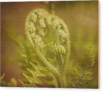 Wood Print featuring the photograph Fern Heart by Peggy Collins