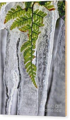 Fern In Ice Wood Print by Dan Friend