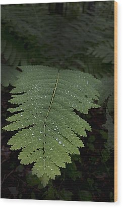 Fern In The Dark Wood Print