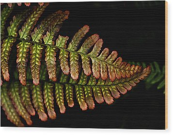 Wood Print featuring the photograph Fern by Sonya Lang