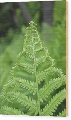 Fern Wood Print by Tiffany Erdman