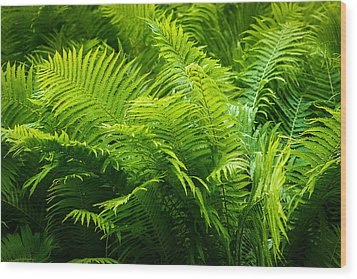Ferns 1 Wood Print