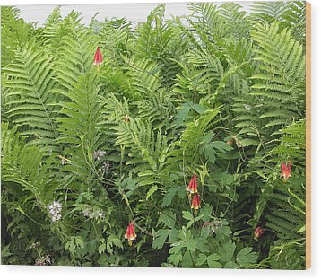 Wood Print featuring the photograph Ferns And Columbines by Wayne Meyer